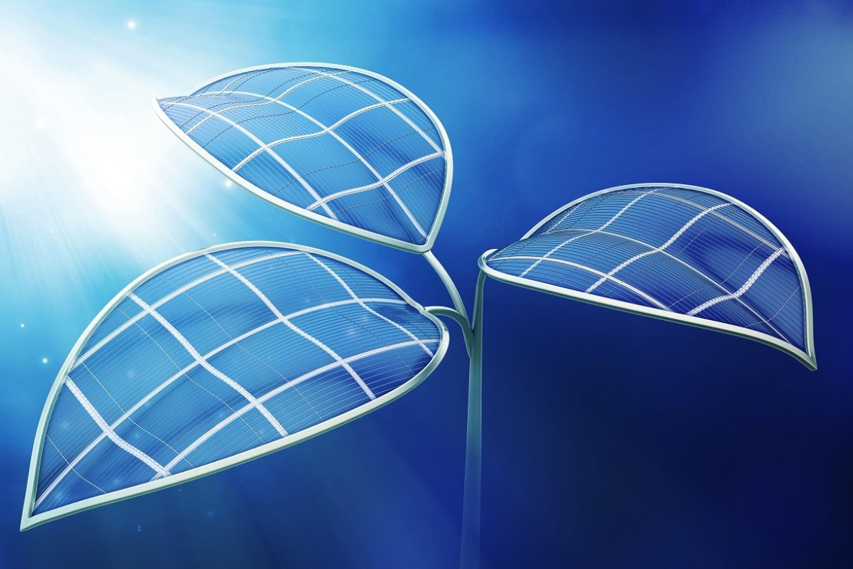 Le biomimétisme, un modèle d'innovation durable pour les secteurs de l'énergie et de l'environnement